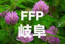 2016年度 JFAフットボールフューチャープログラム(FFP)岐阜県代表選手決定!