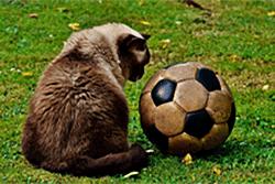 【高校生のサッカー進路】各エリア大学リーグに所属している234大学一覧
