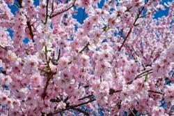 九州地区の今週末の大会・イベント情報【3月10日(土)、3月11日(日)】