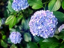 関東地区の今週末の大会・イベント情報【6月30日(土)、7月1日(日)】