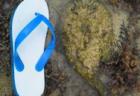 高円宮杯JFA・U-15サッカーリーグ2018 富山県【北信越】全日程終了!2部昇格トーナメント結果、3部育成リーグ結果更新!