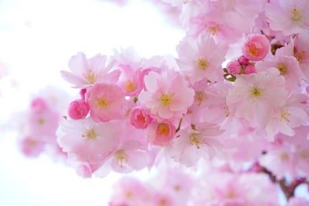 関東地区の今週末の大会・イベント情報【3月9日(土)〜3月10日(日)】