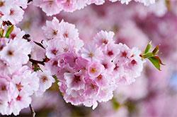 中国・四国地区の今週末の大会・イベント情報【3月23日(土)~3月24日(日)】