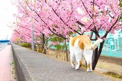 関西地区の今週末の大会・イベント情報【4月4日(木)~4月7日(日)】