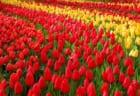 東海地区の今週末の大会・イベント情報【4月13日(土)、4月14日(日)】