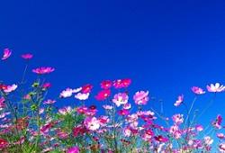 関東地区の今週末の大会・イベント情報【9月28日(土)~29日(日)】